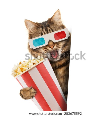 Cinema concept. Cat in the 3d glasses with popcorn basket.  - stock photo