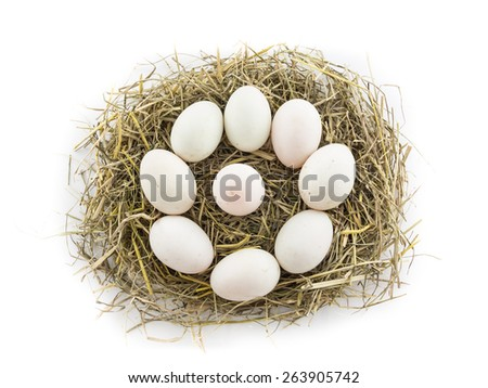circle duck egg in nest