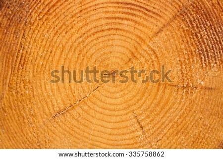 Circle lines of log - stock photo