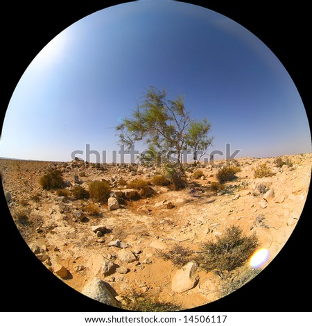 circular fish-eye shot of a single green tree at sunlit desert with small rocks at the foreground and gradient blue sky as a background
