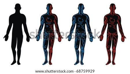 Circulation System - Vein, Artery circulatory drawn in anatomical position of the human body - stock photo