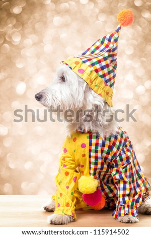 Circus Clown Dog under sparkling lights - stock photo