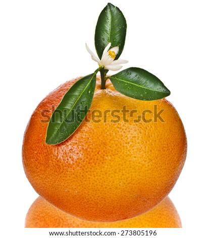 citrus grapefruit  detail close up isolated on white background - stock photo