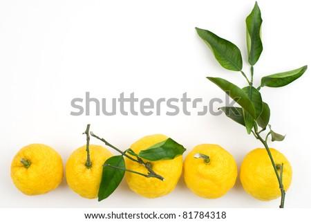 Citrus on a white background - stock photo
