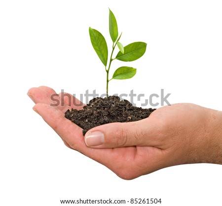 citrus sapling in hands - stock photo