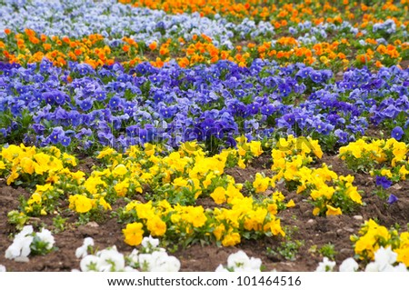 City bed with violets - stock photo