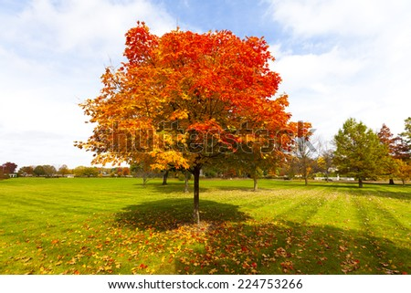 City Park in Fall - stock photo