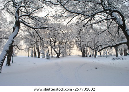City Park in Winter After Snowfall. - stock photo