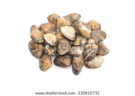 Clam shell - stock photo