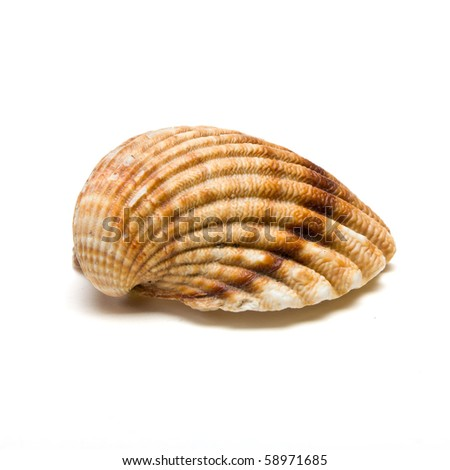 Clam shell half from low perspective isolated against white.