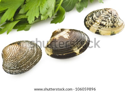 Clams and spices on the white background