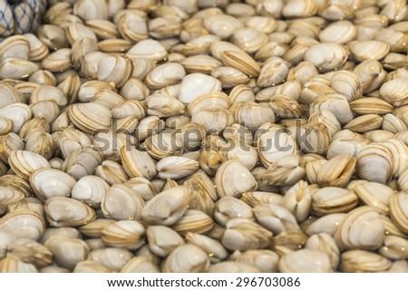Clams at the fish market - stock photo