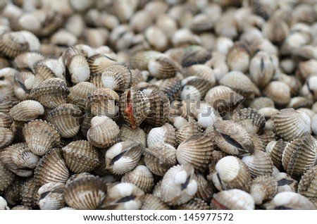 Clams/cockles - stock photo