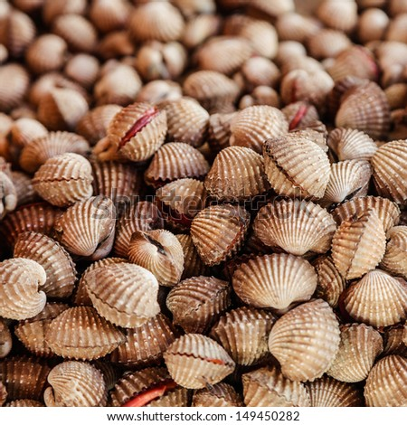 Clams/cockles in Thai local market - stock photo
