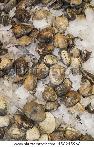 Clams for sale in farmers market, Seattle, Washington - stock photo