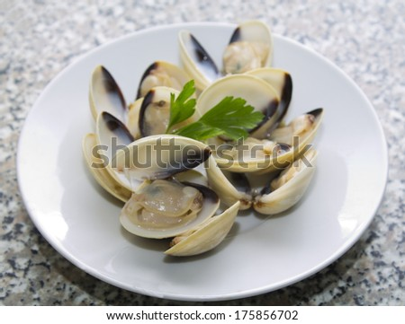 clams with white background - stock photo