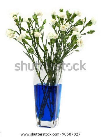 Classic chemistry experiment, dying white carnations with food coloring - stock photo