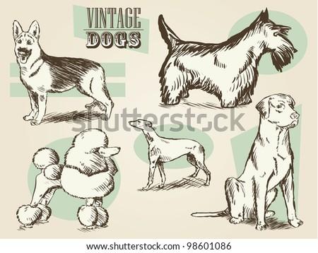 Classic Retro Ornate Dog Collection - stock photo