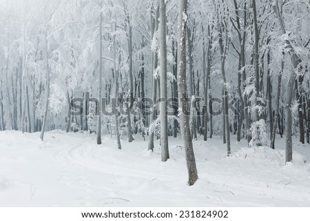 Classic winter scene in the forest with heavy snow covering the trees - stock photo