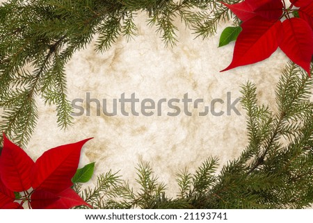 Classical Christmas background on parchment, bordered with fir twigs and poinsettia - stock photo