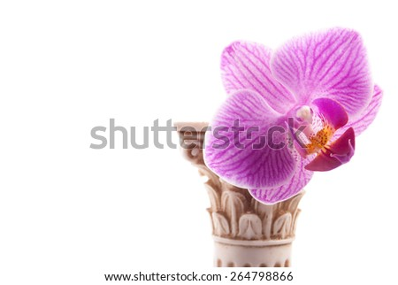 Classical column with flower isolated on white background. - stock photo