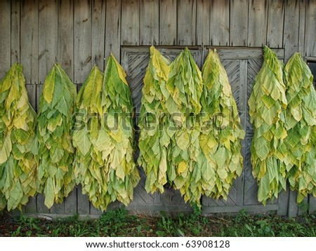 Classical way of drying tobacco