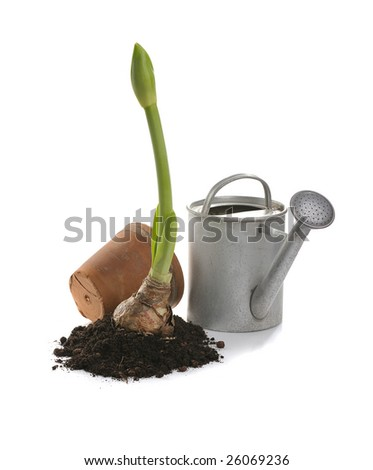 clay pot, iron watering can, soil, seedling,  on white background - stock photo