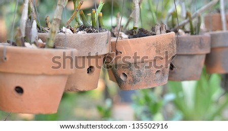 Clay pots for orchids - stock photo