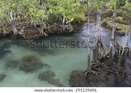 clean and clear stream in deep tropical forest, south of Thailand - stock photo