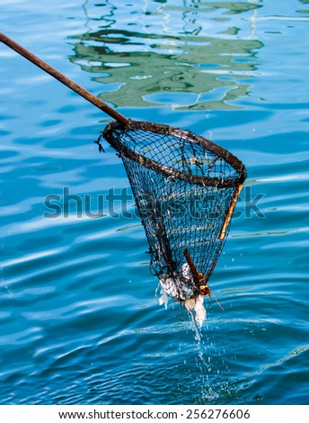 clean sea with fish bucket - stock photo