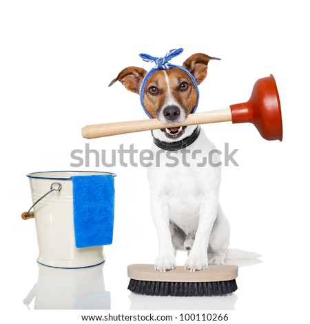 cleaning dog - stock photo