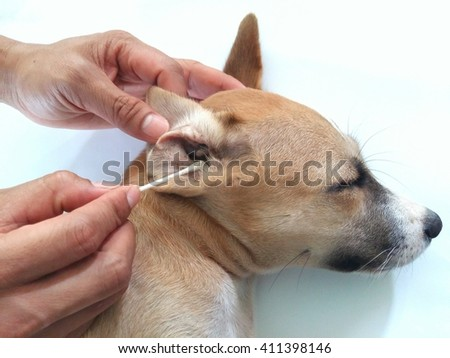 Cleaning Dog on white background