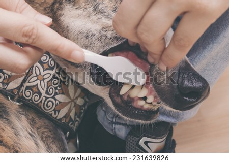 cleaning dog's teeth
