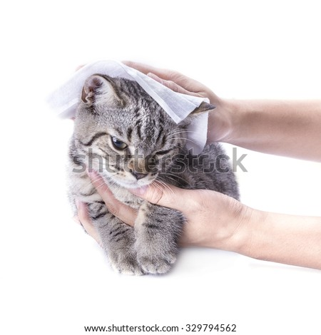 cleaning hair cat by baby wipes ,isolated on white background. - stock photo