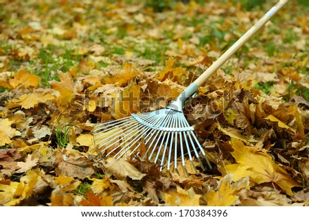 Cleaning of autumn leaves on a green lawn - stock photo