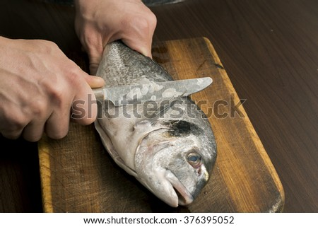cleaning sea bream fish on a wooden board - stock photo