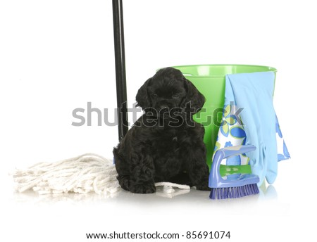 cleaning up after new puppy - american cocker spaniel sitting beside cleaning products on white background - stock photo