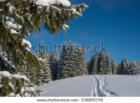 Clear and sunny winter day. Forest covered with snow against blue sky background. Ski-track is in the foreground. Little tourist figure is seen in the  edge of a wood. - stock photo