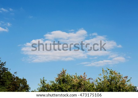 Clear Blue Summer Sky With a White Fluffy Cloud and a Tree Line With Copy Space