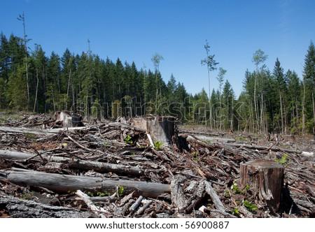 Clear cut in British Columbia. - stock photo