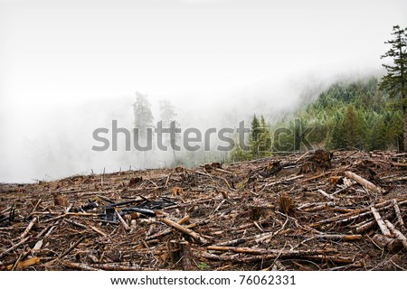 Clear Cut Logging - stock photo