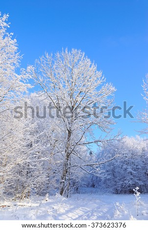 Clear day in the winter forest - stock photo