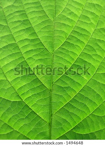 clear green leaf of tree - stock photo