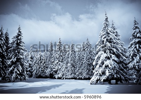 Clear skies, snow on trees after a winter storm - stock photo