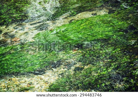 Clear water flowing in the creek. Green water plants. - stock photo
