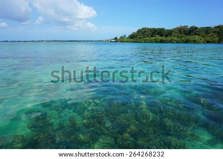 Clear water with corals below sea surface and the island of Solarte in background, Caribbean, Bocas del Toro, Panama - stock photo