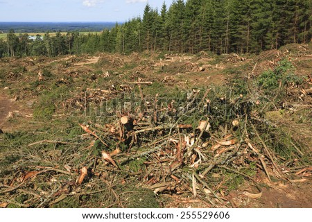 Clearcut area in the forest - stock photo