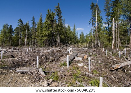 Clearcut forest in British Columbia Canada - stock photo