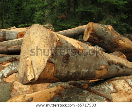 Clearfelling forest clearcut - stock photo