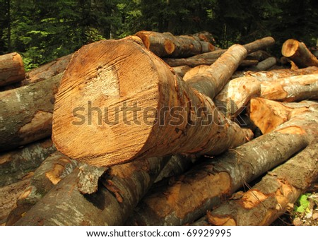 Clearfelling forest clearcut logging - stock photo